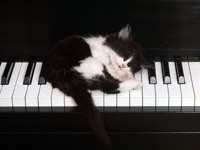 Котенок спит на пианино