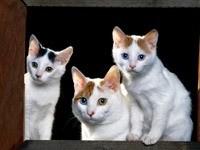 Три котенка на окне