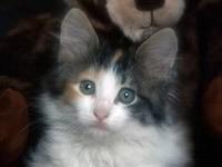 Мордочка котика