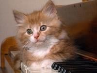 Котенок лежит на фортепиано