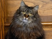 Пушистый и лохматый кот
