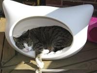 Кошка спит в кошачьей кроватке