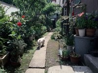Кошка идет по дорожке в саду