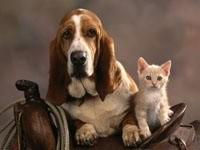 Котенок с таксой