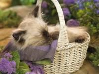 Котенок спит в корзине
