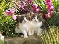 Два котенка в клумбе