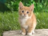 Котенок удивленный