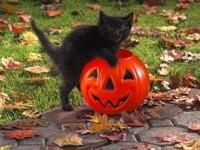 Черный котенок и тыква с Хэллоуина