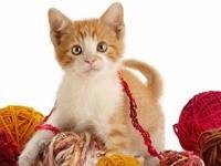 Котенок с клубками ниток