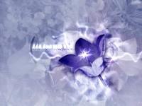 Искрящийся цветок