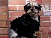 Собака шит - су в курточке