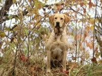 Собака в осеннем лесу