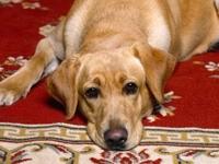 Тоскливый взгляд собачки