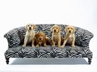 Четверо щенков на софе