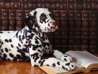 Далматинец в библиотеке с книгой