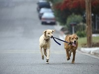 Прогулка двух собак