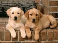 Двое щенков на ступеньках