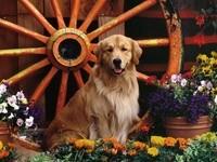 Большая собака сидит в клумбе