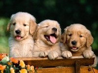 Трое симпатичных щенков