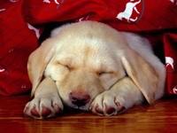 Сладкий сон щенка
