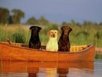 Три собаки в лодки на воде
