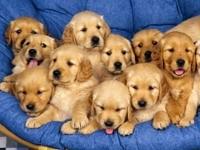 Много щенков на диване