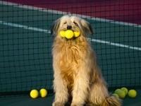 Бриар  с теннисными мячиками