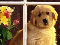 Собака за окном на подоконнике с цветами