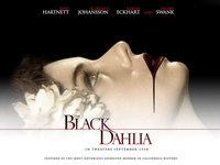 Черный Георгин, Black Dahlia