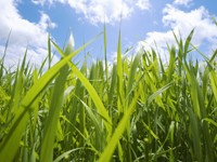 Зеленая трава и небо