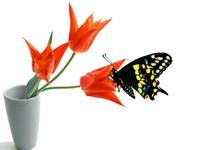 Три тюльпана с бабочкой  в вазе
