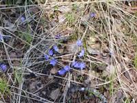 Маленькие цветы в траве