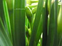 Зеленые листья с бутоном цветка