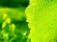 Малахитового цвета листочек