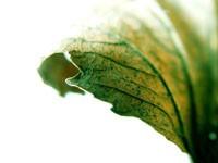 Болотного цвета листочек