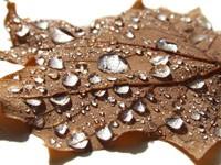 Коричневый листок с капельками воды