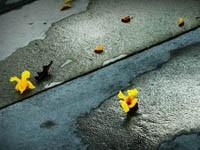 Желтые цветы в воде