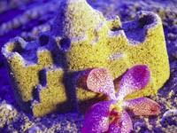 Тигровая орхидея у песочного замка