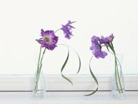Две вазы с фиолетовыми цветами