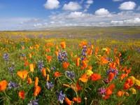 Цветущая равнина