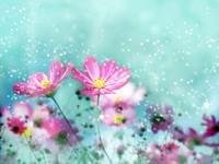 Розовые цветы под снегом