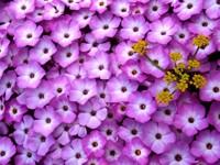 Коврик из розовых цветов