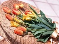 Букет тюльпанов на корзине