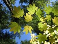 Зеленые листья