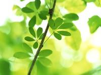 Ветка с зелеными листьями