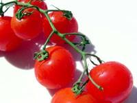 Ветка помидор