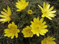 Куст желтых цветов