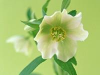 Белый цветок на зеленом фоне
