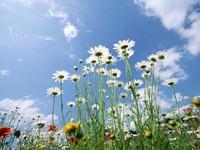 Цветочный луг на фоне неба
