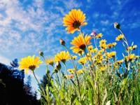 Цветы на фоне синего неба